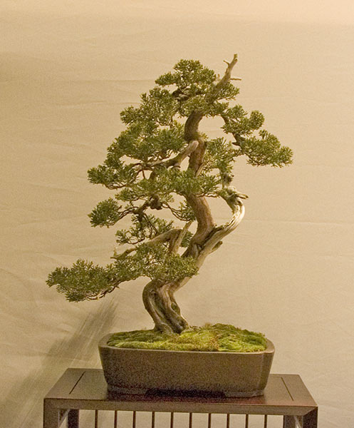 Bonsai Photo of the Day 5-9-2019