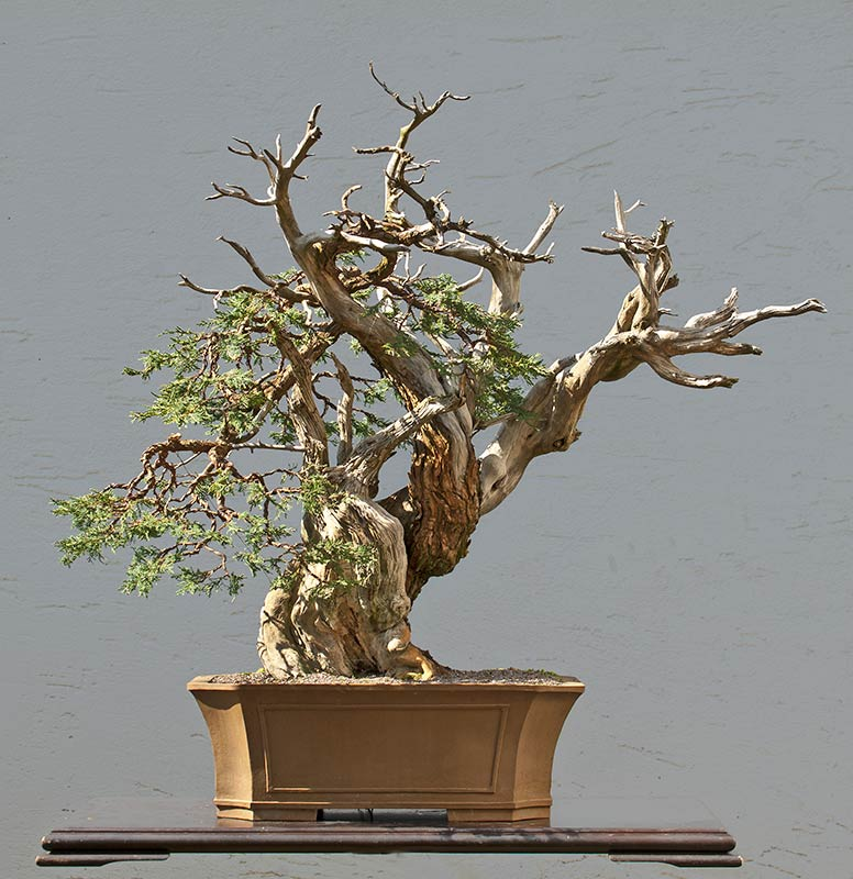 Bonsai Photo of the Day 6-4-2019