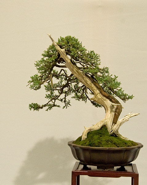 Bonsai Photo of the Day 6-5-2019