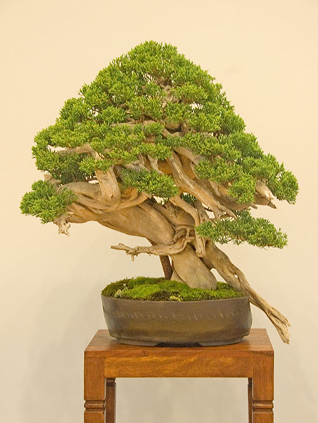Bonsai Photo of the Day 6-7-2019