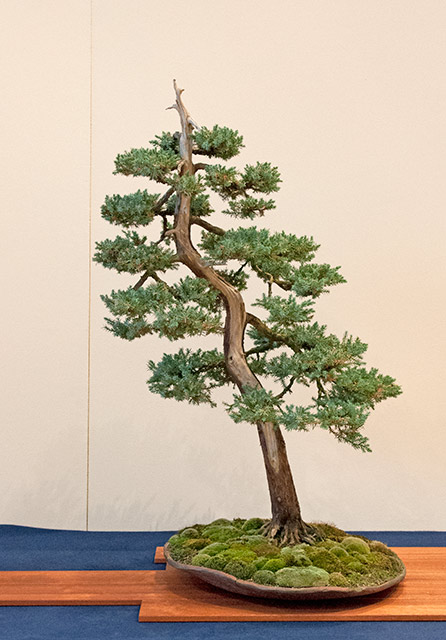 Bonsai Photo of the Day 6-18-2019