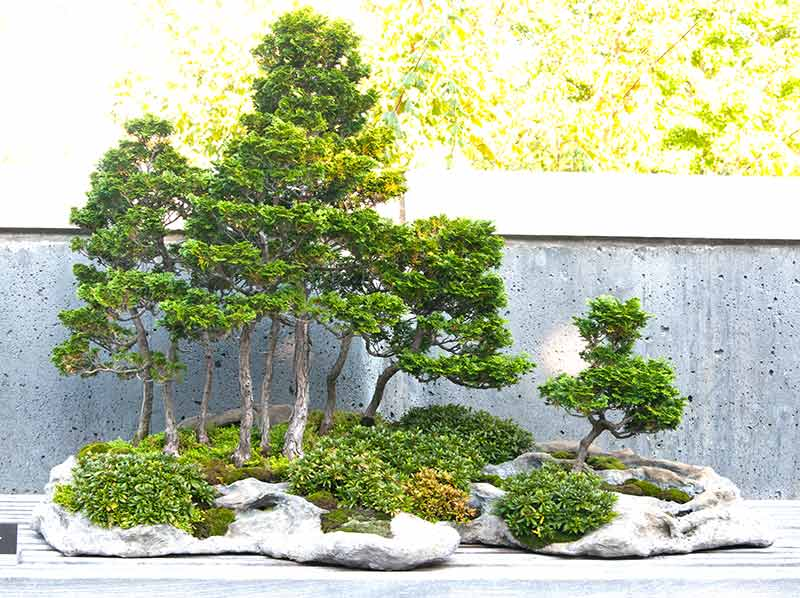 Bonsai Photo of the Day 6-28-2019
