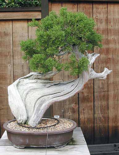Bonsai Photo of the Day 7-11-2019