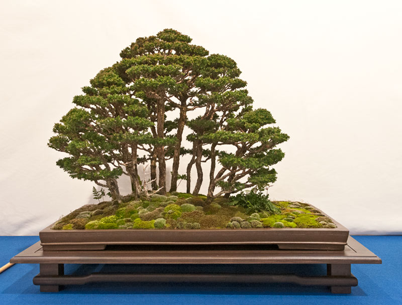Bonsai Photo of the Day 7-15-2019
