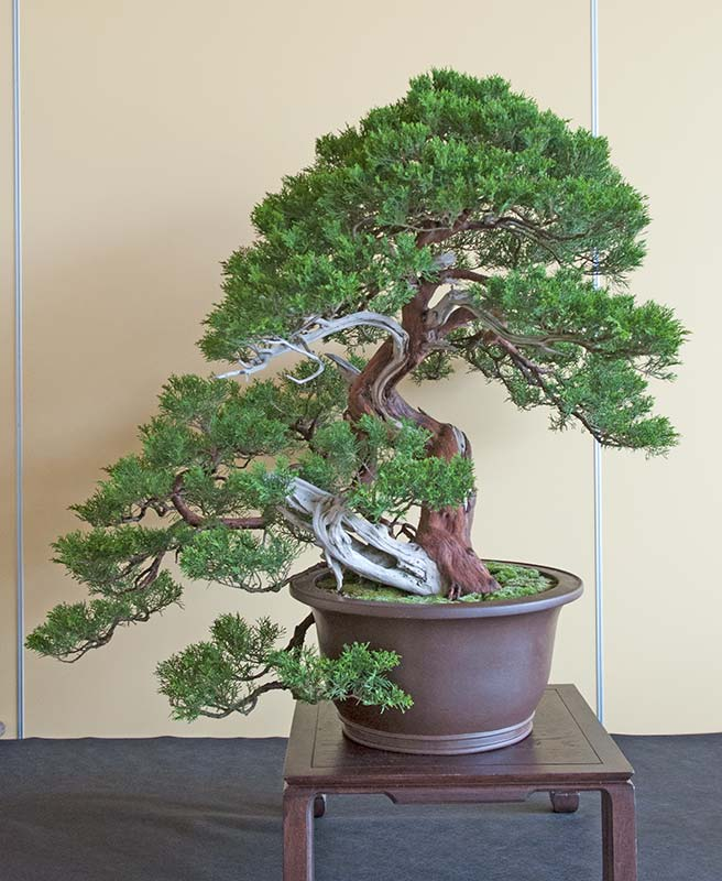 Bonsai Photo of the Day 7-17-2019