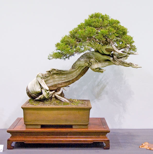 Bonsai Photo of the Day 7-29-2019