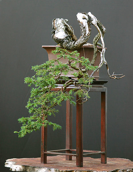 Bonsai Photo of the Day 8-1-2019