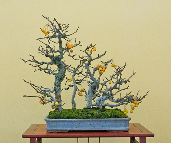 Bonsai Photo of the Day 8-14-2019