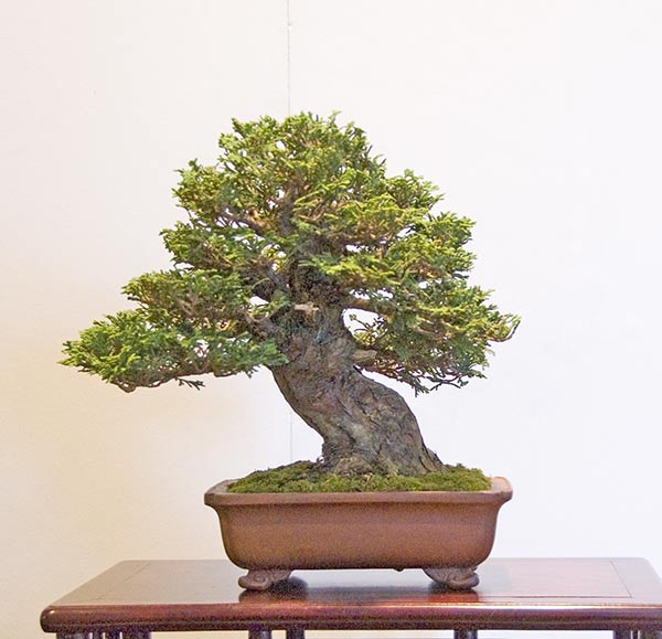 Bonsai Photo of the Day 8-16-2019