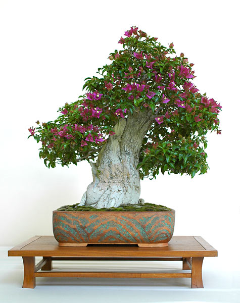 Bonsai Photo of the Day 8-20-2019