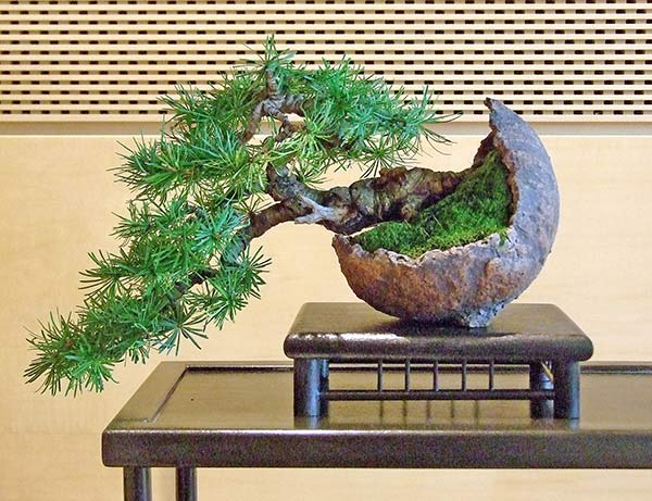 Bonsai Photo of the Day 8-22-2019