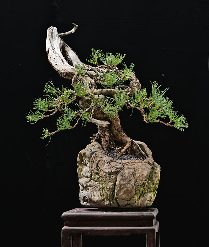 Bonsai Photo of the Day 8-27-2019