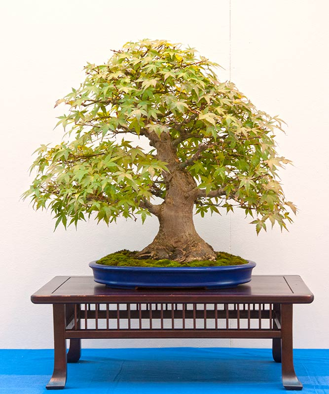 Bonsai Photo of the Day 9-11-2019