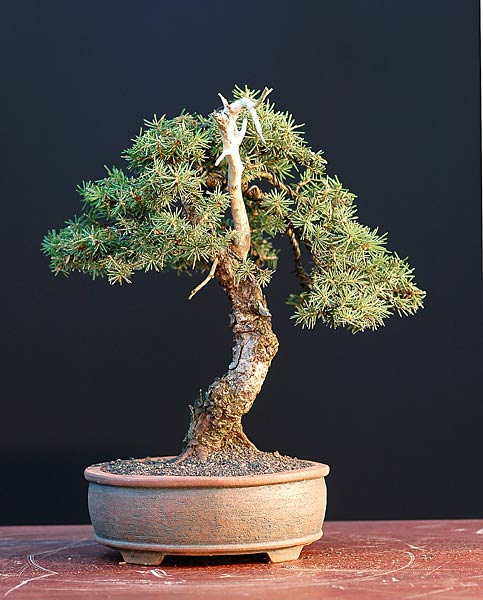 Bonsai Photo of the Day 9-16-2019