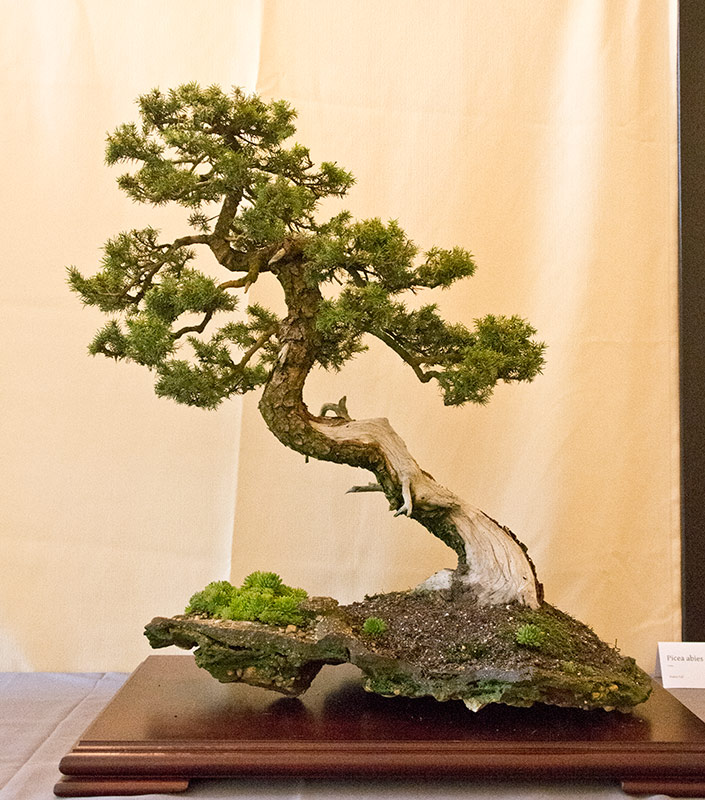 Bonsai Photo of the Day 9-17-2019
