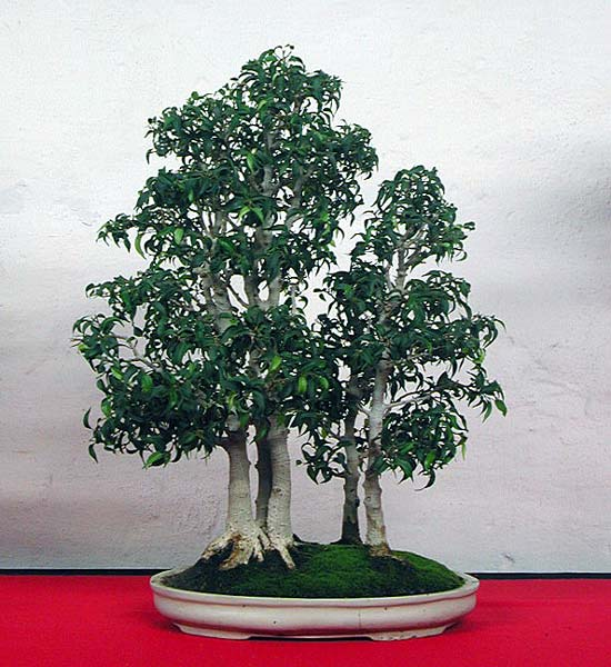 Bonsai Photo of the Day 9-19-2019