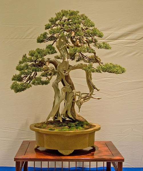 Bonsai Photo of the Day 9-30-2019