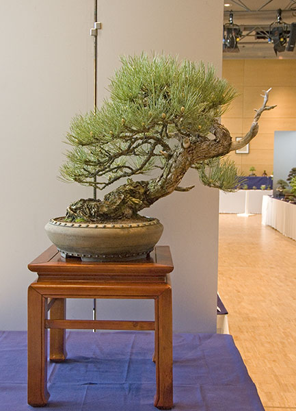Bonsai Photo of the Day 9-9-2019