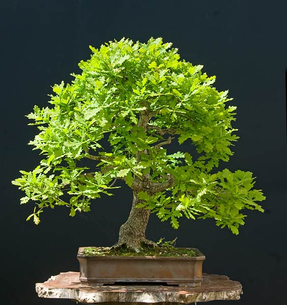 Bonsai Photo of the Day 10-16-2019