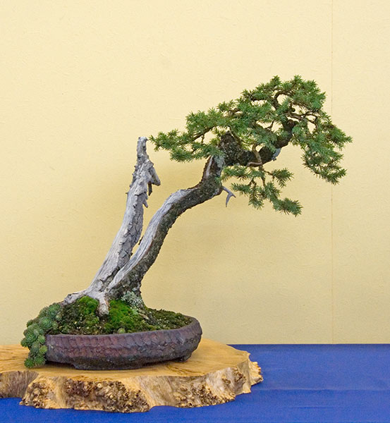 Bonsai Photo of the Day 10-28-2019