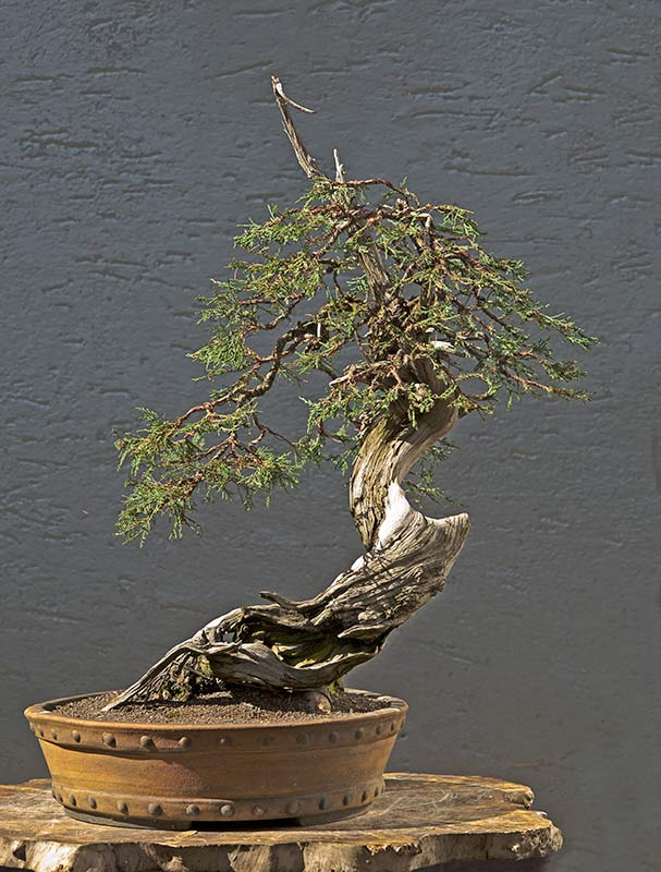 Bonsai Photo of the Day 10-30-2019