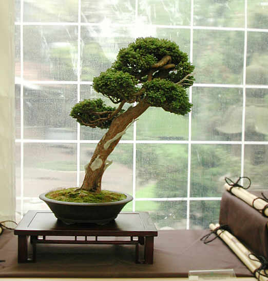 Bonsai Photo of the Day 10-8-2019
