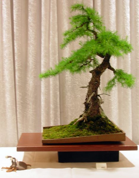 Bonsai Photo of the Day 11-15-2019