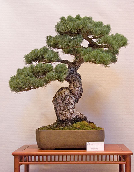 Bonsai Photo of the Day 11-29-2019