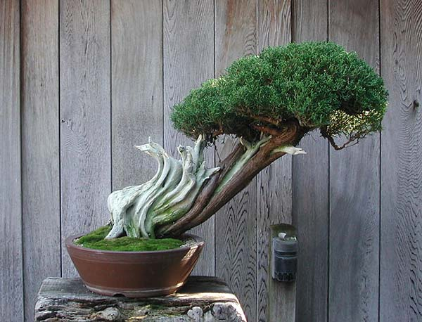 Bonsai Photo of the Day 11-5-2019