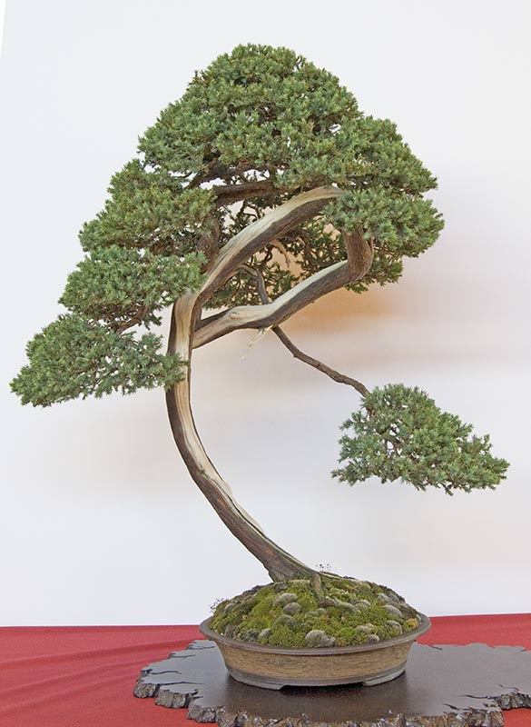 Bonsai Photo of the Day 12-18-2019