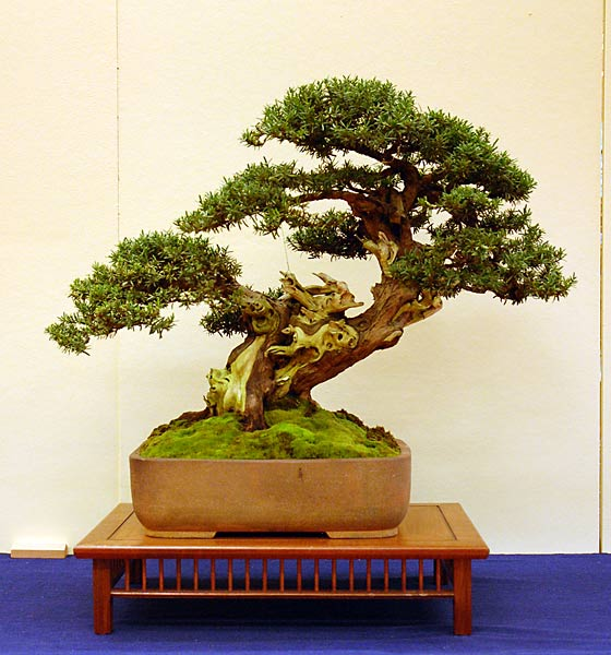 Bonsai Photo of the Day 12-23-2019