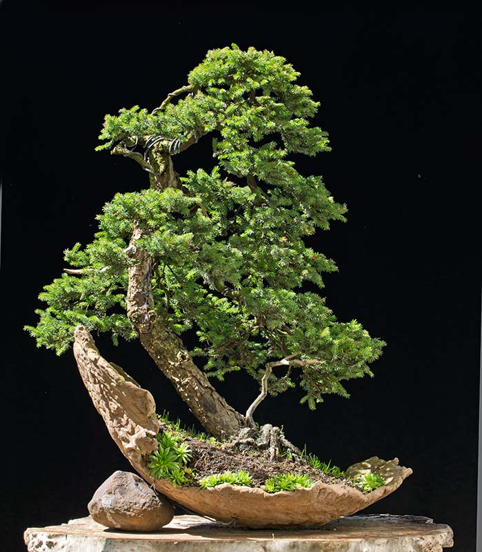 Bonsai Photo of the Day 12-27-2019