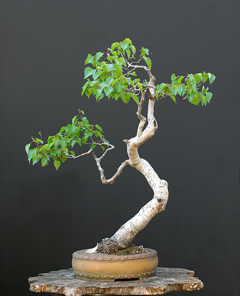 Bonsai Photo of the Day 1-10-2020