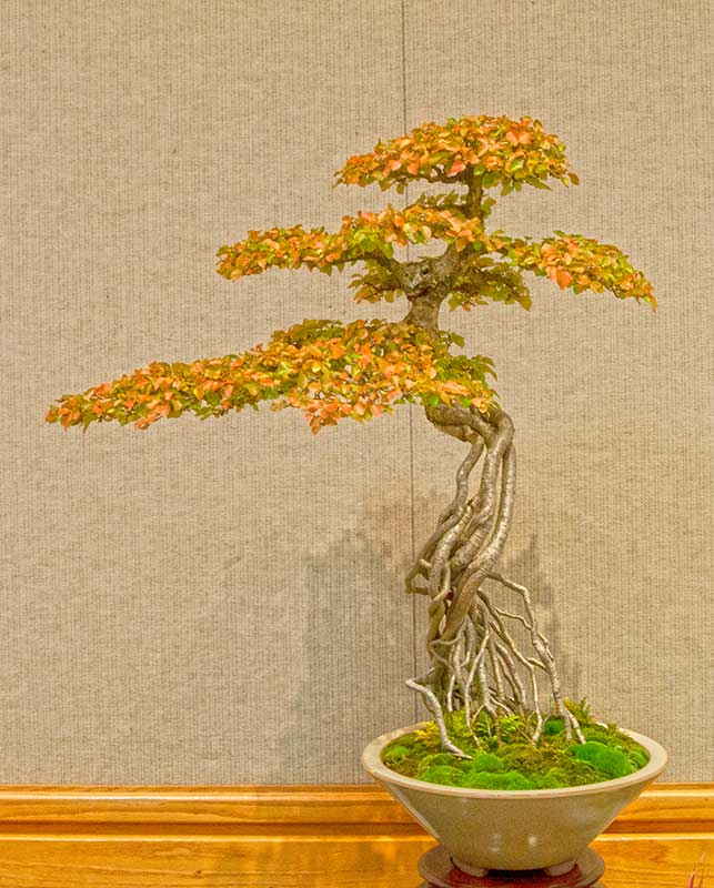 Bonsai Photo of the Day 1-13-2020