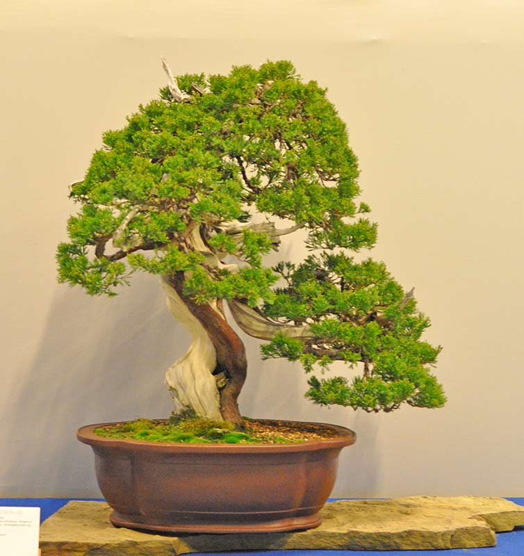 Bonsai Photo of the Day 1-14-20