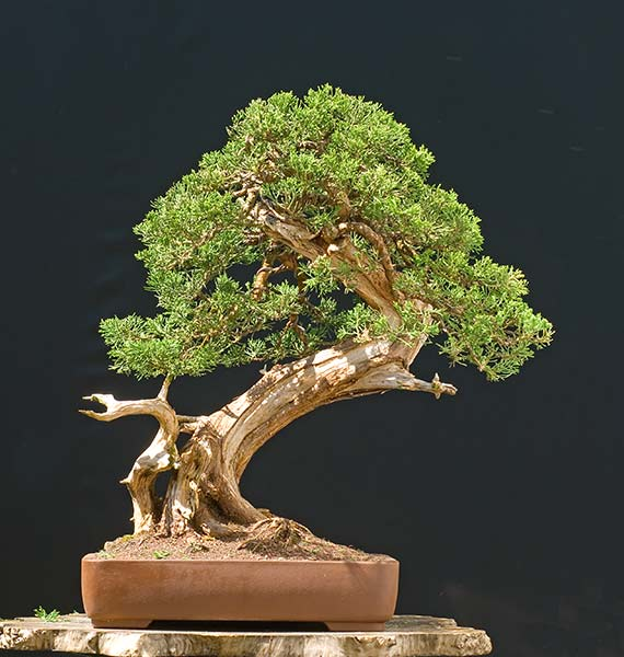 Bonsai Photo of the Day 1-23-2020