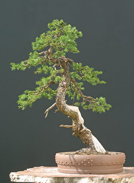 Bonsai Photo of the Day 1-27-20