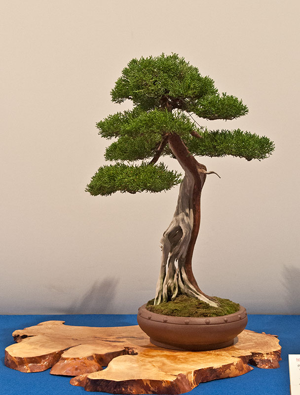 Bonsai Photo of the Day 1-6-2020