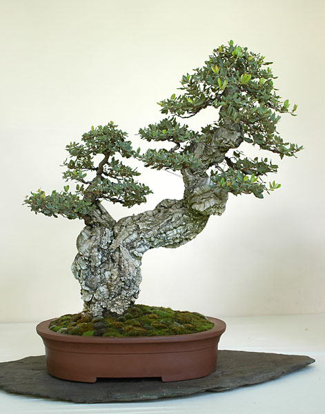 Bonsai Photo of the Day 2-10-20