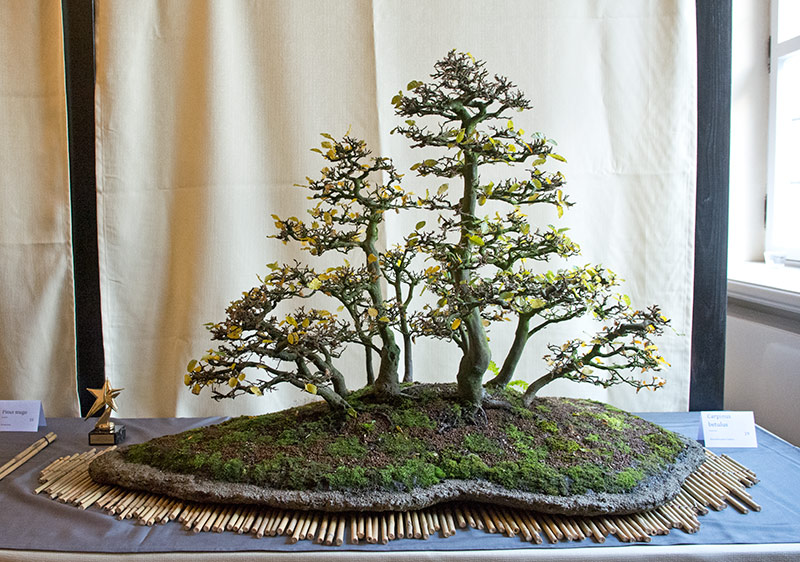 Bonsai Photo of the Day 2-11-20