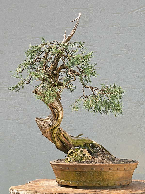 Bonsai Photo of the Day 2-14-20