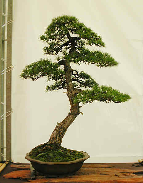 Bonsai Photo of the Day 2-17-20