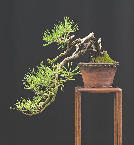 Bonsai Photo of the Day 2-18-20