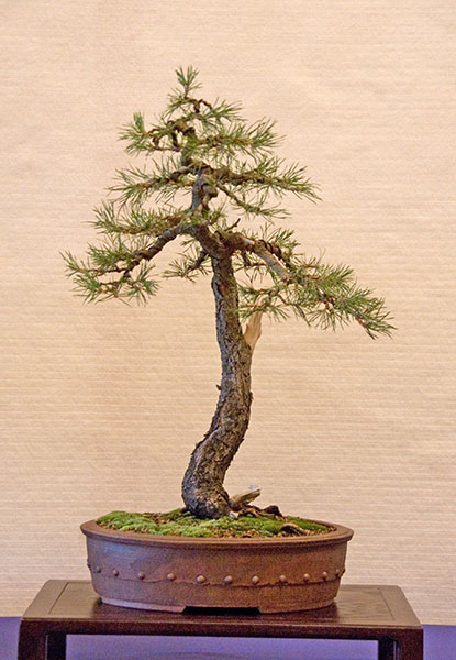Bonsai Photo of the Day 2-19-20