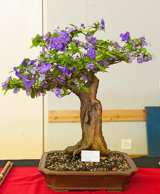 Bonsai Photo of the Day 2-25-20