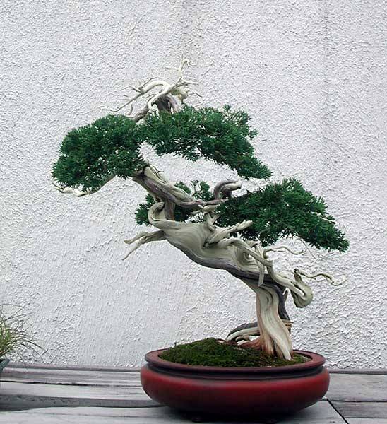 Bonsai Photo of the Day 2-27-20