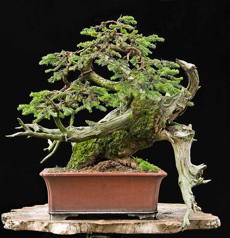 Bonsai Photo of the Day 2-4-20