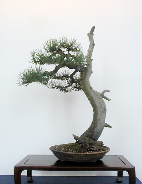 Bonsai Photo of the Day 3-10-20