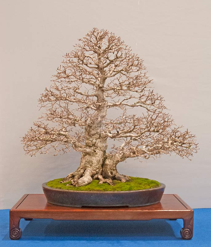 Bonsai Photo of the Day 3-17-20