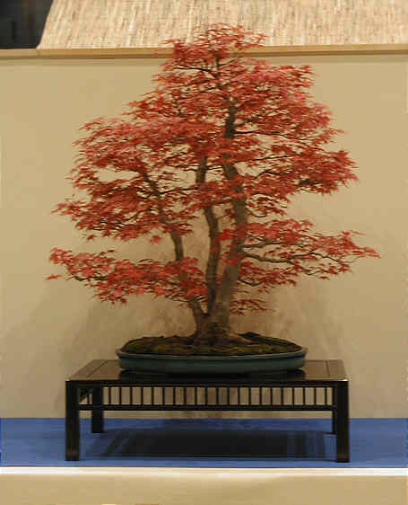 Bonsai Photo of the Day 3-2-20